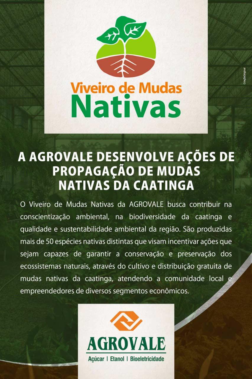 agrovale_viveiro_de_mudas_nativas